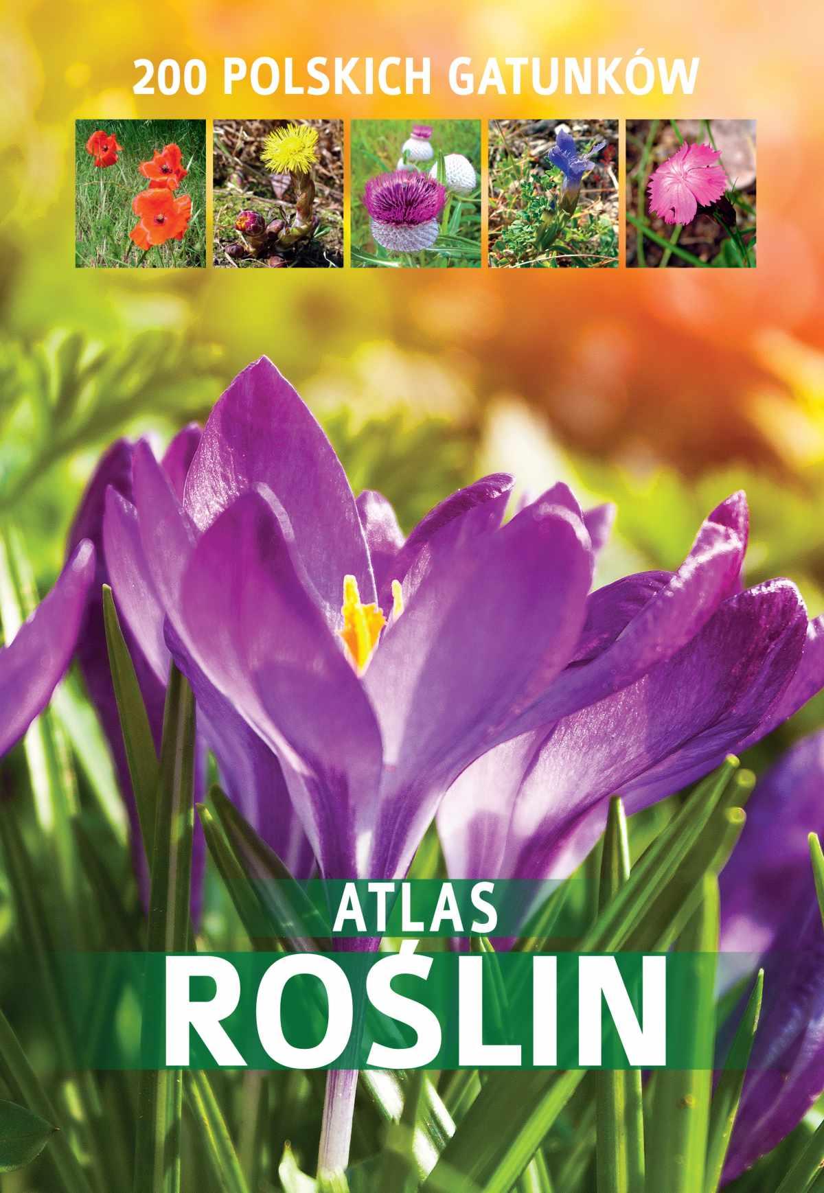 Atlas roślin. 200 polskich gatunków - Ebook (Książka PDF) do pobrania w formacie PDF