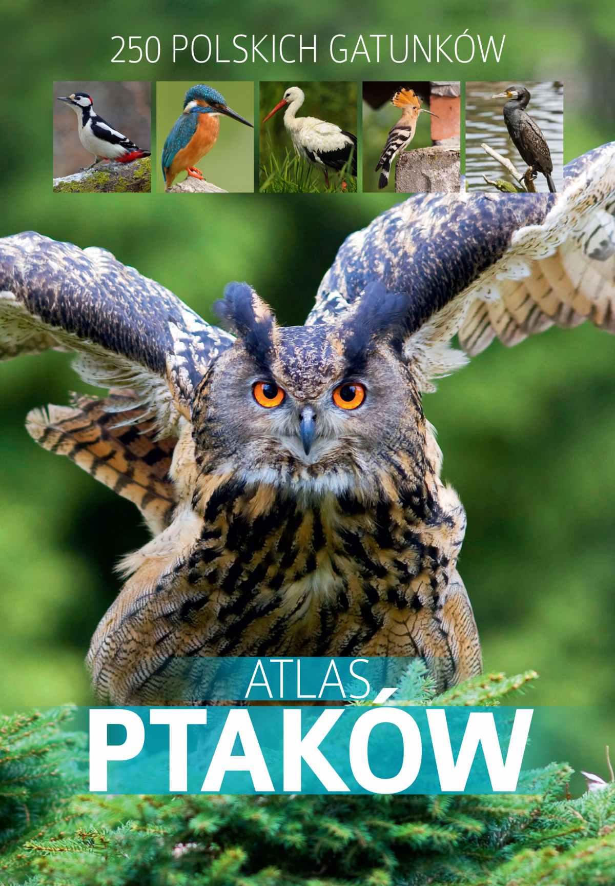 Atlas ptaków - Ebook (Książka PDF) do pobrania w formacie PDF