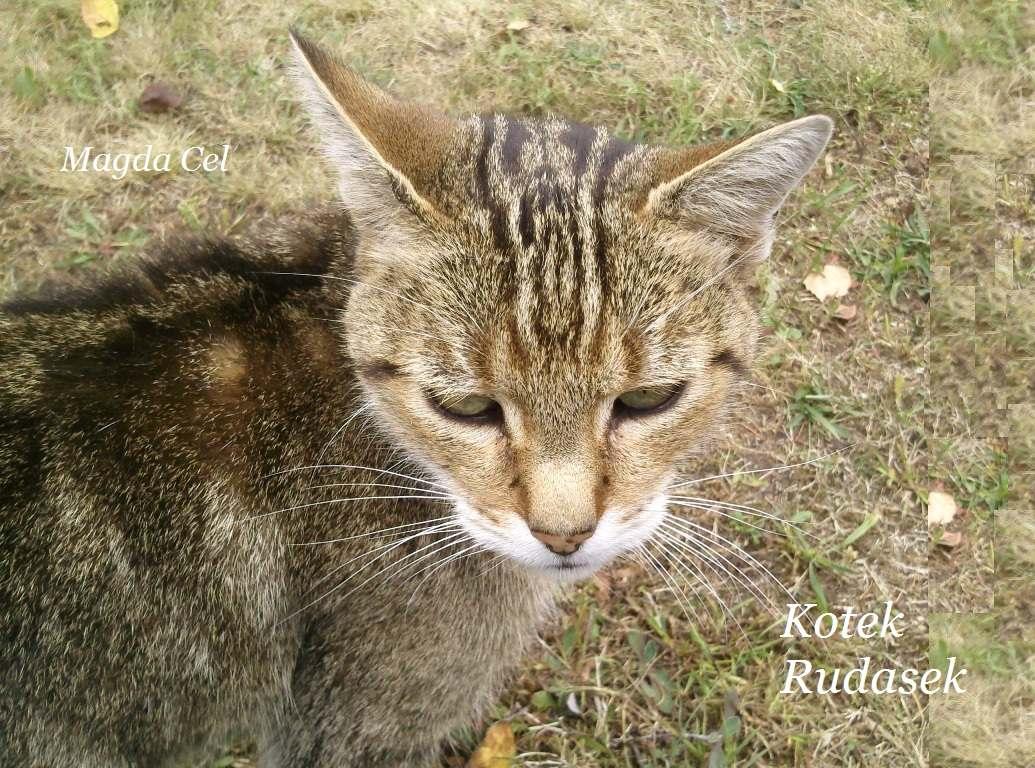 Kotek Rudasek - Ebook (Książka PDF) do pobrania w formacie PDF