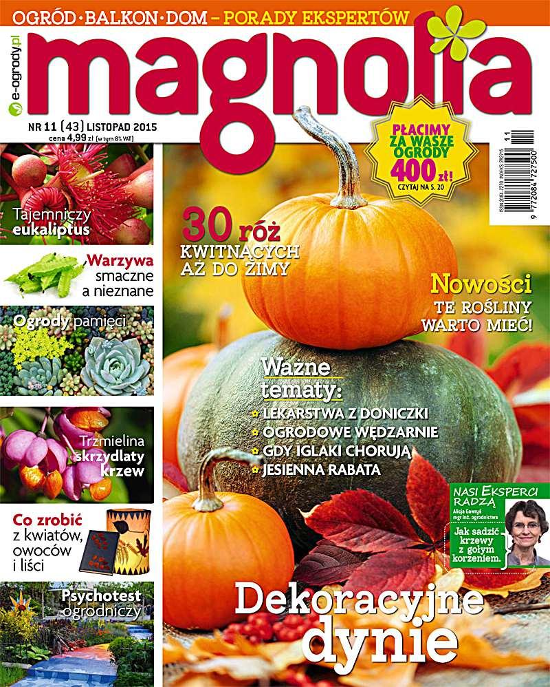 Magnolia 11/2015 - Ebook (Książka PDF) do pobrania w formacie PDF