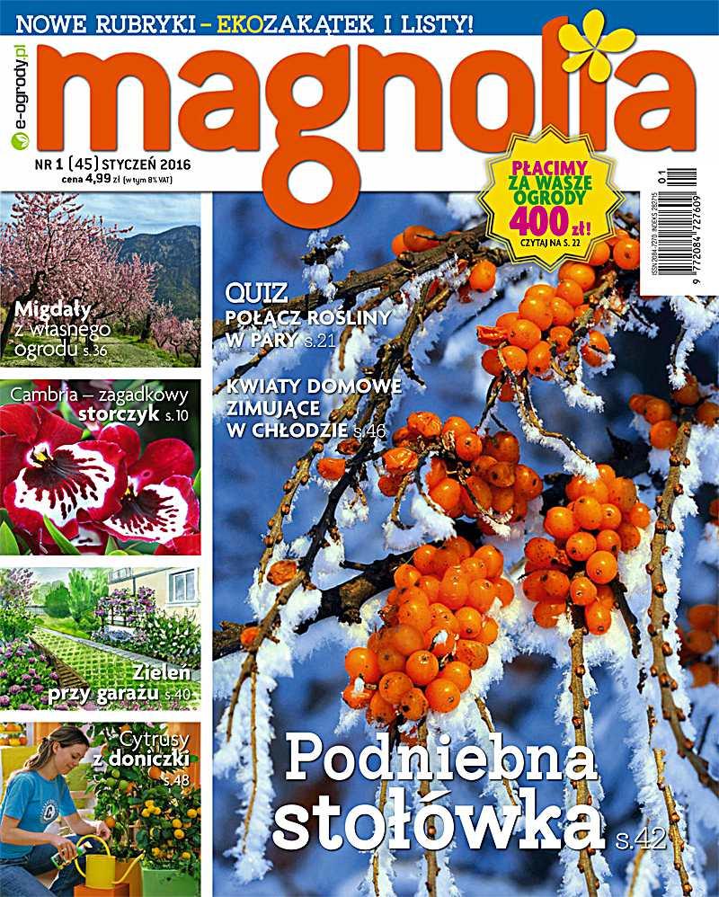 Magnolia 1/2016 - Ebook (Książka PDF) do pobrania w formacie PDF