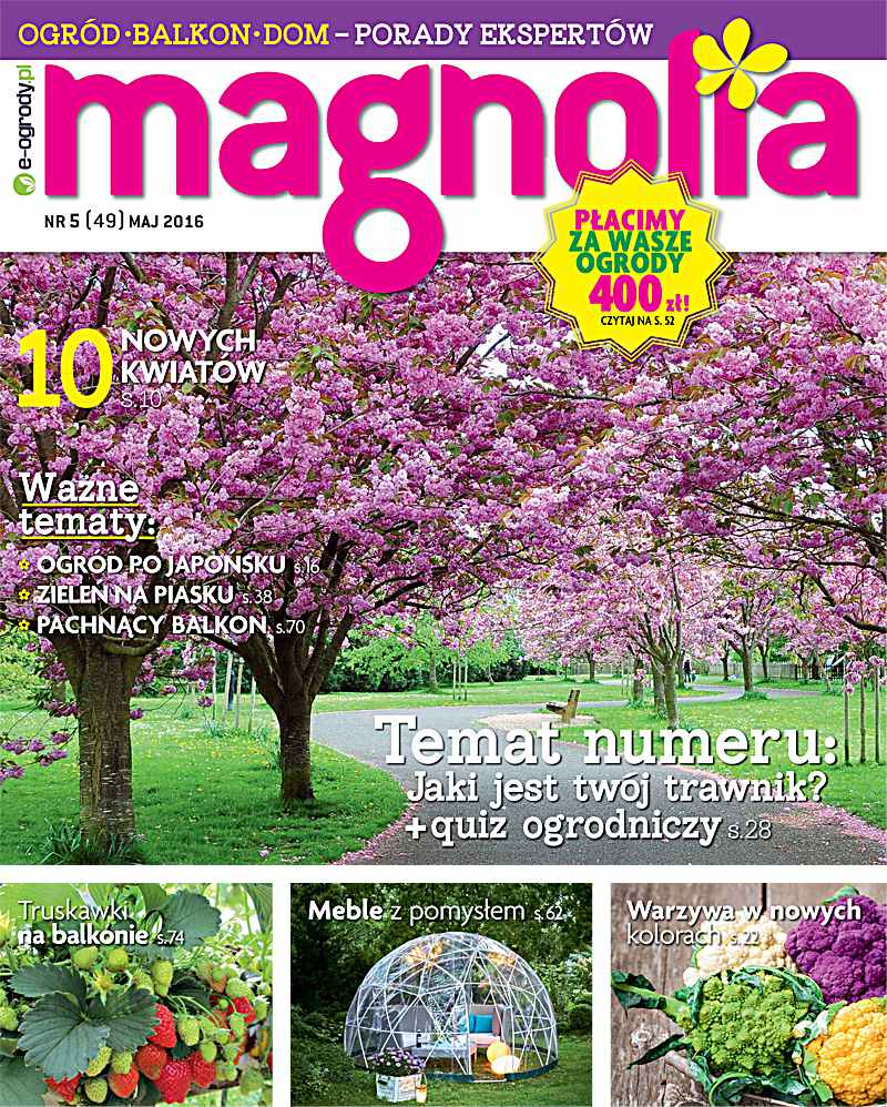Magnolia 5/2016 - Ebook (Książka PDF) do pobrania w formacie PDF