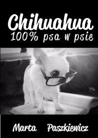 Chihuahua 100% psa w psie