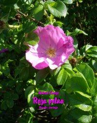 Róża polna. Nowele i fantazje - Antoni Lange - ebook